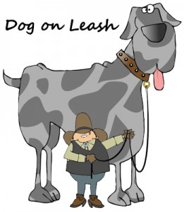 Dog Collars, Dog Leashes, Belts | Dog on Leash