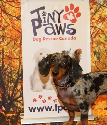 Blue from Tiny Paws Dog Rescue with his Baby Leopard Leather Collar